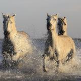 В коневодстве